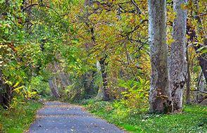 Bidwell Park2